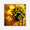 You are my sunshine.....SS (BirgittaSjostedt) Tags: sunflower flower nature closeup texture paint photoborder sliderssunday macro birgittasjostedt