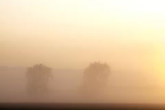 Dreamworld (Wouter de Bruijn) Tags: fujifilm xt1 fujinonxf90mmf2rlmwr fog mist haze sunrise dawn morning nature landscape dream soft pastel mysterious mystical magic middelburg walcheren zeeland nederland netherlands holland dutch trees