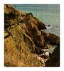 Scabbacombe Head(Devon) (williamwalton001) Tags: stone trees texture pentaxart rocks sea cliffs nationaltrust borders rockpaper