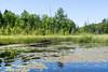 Donken & Pike Lake Paddling, July 2017-2 (Nathan Invincible) Tags: paddling kayak lake forest stateforest woods summer keweenaw keweenawpeninsula michigan michigansupperpeninsula michiganskeweenawpeninsula mi upperpeninsula up wetlands donken