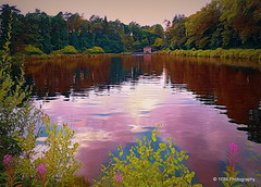 An Evening at the Reservoir (Rollingstone1) Tags: craigmaddiereservoir milngavie eastdunbartonshire scotland water trees reservoir flowers waterworks colour vivid nature outdoors evening pond art artwork lake landscape scene scenery awardtree reflections pink music