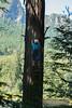 EOG-51.jpg (Joel Spooner Photography) Tags: arblife arborist bc expeditionoldgrowth joelspooner joeliphoto climbtrees exploretrees explorebc inspire learntoclimb oldgrowth treeclimbing