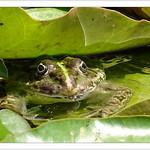 Sei kein Frosch ... ! thumbnail
