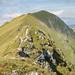 Ibex on the ridge