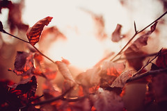 Autumn Mood by thethomsn - Licenses are available on • Getty Images  Follow me on: • 500px