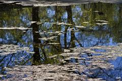 Reflejos... (El Huerto de la Farmacia) (svet.llum) Tags: paisaje primavera reflejos moscú rusia parque jardín estanque agua