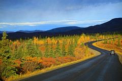 Autumn in Denali National Park, (2) (louelke - back and busy) Tags: denalinationalpark alaska autumn fall colors colorful light curves road