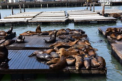 Pier 39, San Francisco, California, August 2017 144 (tango-) Tags: west ovest western us usa unitedstates states