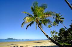 Mission Beach (Georg Hirsch) Tags: australien australia queensland missionbeach beach sand palmen palmenstrand palm coast pacific dream dreamtime sea meer sonne sommer summertime holiday