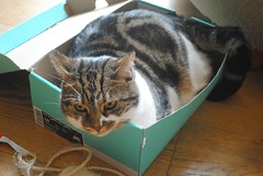 Brian and the box (zawtowers) Tags: brian cat kitty feline adorable cute snuggled inside shoe box curled up comfortable content snuggly