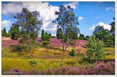 Im Tal der Haverbeeke (Don111 Spangemacher) Tags: wolken erika park pflanzen himmel heide heidekreis heideblüte hochsommer reisen romantik niedersachsen natur naturschutzgebiet naturpark niederhaverbeck kulturlandschaft