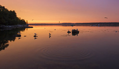 Silent ripples.... (Melanie Bradley) Tags: water seagulls