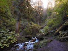 Multnomah-Falls-Columbia-Gorge-DSCN3349