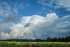 Convective Showers (Dan's Storm Photos & Photography) Tags: rain rainshaft rainshafts weather wisconsin clouds cumulonimbus convection cumulus nature skyscape skyscapes sky landscape landscapes updraft updrafts anvil anvils storms storm thunderstorm thunderstorms thunderstormbase thunderhead thundershower thunderheads towers