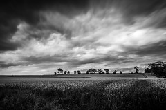 "dramatic clouds over Aberdeenshire: fine art black & white view from the ruined baronial chateau of Tolquhon Castle, Scotland. (grumpybaldprof) Tags: canon 7d ""canon7d"" sigma 1020 1020mm f456 ""sigma1020mmf456dchsm"" wideangle ultrawide bw blackwhite ""blackwhite"" ""blackandwhite"" noireetblanc monochrome ""fineart"" striking artistic interpretation impressionist stylistic style bright contrast shadow dark black white illuminated dramatic mood moody atmosphere storm stormclouds aberdeenshire scotland ""tolquhoncastle"" tolquhoun pitmedden castle stone chateau renaissance ""preston'stower"" forbes fortress longexposure nd filter"