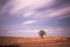 Castaño _XT28546 (Alberto Estella) Tags: nube pino libre aire mirador paisaje tripode color temperatura arbol rojo cielo nocturna exposicion larga star árbol planta hierba aestella estella mar azul costa brava torres agua arena sedosa roca nubes formación rocosa puesta sol fujifilm xt2 bosque senda de