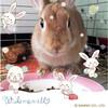 ICHIGO san 59 (Ichigo Miyama) Tags: rabbit うさぎ netherlanddwarfいちごさん。うさぎ ichigo san rabbitbunny netherlanddwarf brown ネザーランドドワーフ ペット いちご