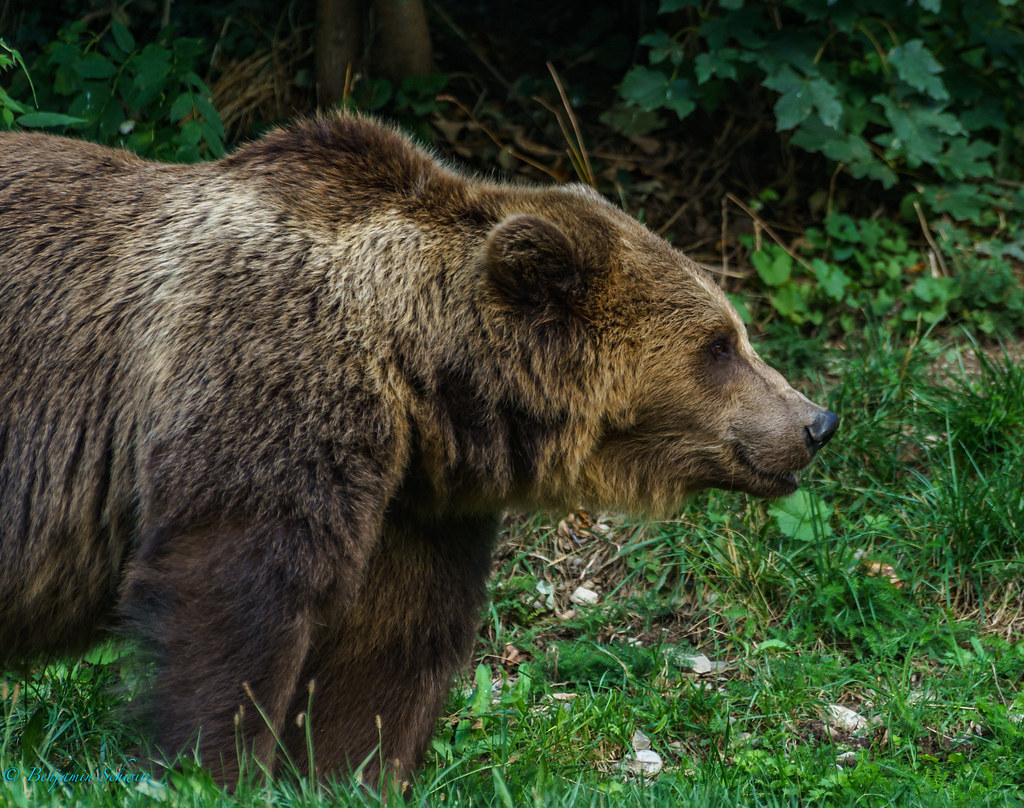 brown bear research paper Lesson plan using brown bear brown bear research paper previews a sample paper order placed for a lesson plan, it explains the format of the lesson plan, and materials needed buy custom college education research papers.