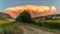Nubes de tormenta (3) (fotochemaorg) Tags: agricultura airelibre amarillo campo escenarural girasoles luzdelsol nube paisaje cielo hierba naturaleza puestadelsol verano árbol