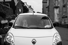bad weather (gaetan.vandenbroucke) Tags: streetphotography fujifilmxpro2 street gaetanvandenbroucke blackwhite dog rain renault noir et blanc bretagne finistère france