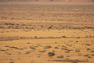 Leopard Country Sesriem Region Namibia South Western Africa