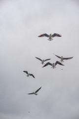 2013-Turquia-Istambul-0322.jpg (Casal Partiu Oficial) Tags: gaivota istambul turquia bird istanbul passaro seagull turkey tr
