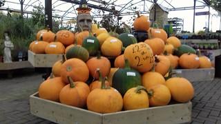 Pumpkin Patch....❤