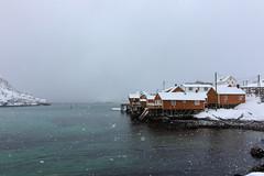 IMG_2591 (alessandro orfanù) Tags: norway lofoten vesteralen hurtigruten winter snow northernlight