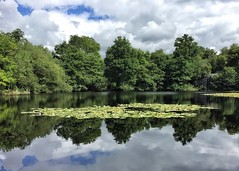 Lake Wood, Sussex (jurassicjay) Tags: cloud sky reflection pond lilypond lillies uckfield july summer scenic natural nature landscape scenery lnr localnaturereserve southernsandstone sandstone wood lake lakewood countryside country southern southeast south eastsussex sussex english european europe eu england british britain britishisles gb greatbritain unitedkingdom uk