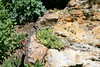 chasmophytes in limestone micro climate (wmpe2000) Tags: 2017 denver denverbotanicgardens rockalpinegarden microclimate limestonecliffs