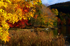 Autumn is soon to show her true colors :-) (Captions by Nica... (Fieger Photography)) Tags: forest fall foliage nature outdoor water landscape lake leaves mountain yellow reflection red brown autumn quebec canada