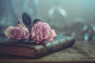 Roses and book