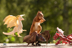 squirrel  on a dragon with peanut (Geert Weggen) Tags: red nature animal squirrel rodent mammal cute look closeup stand funny bright sun backlight walk tail travel departure leave missed up rise ballast holiday journey trip tour drive run castle games thrones building bird nopeople photography dragon catapult attack food peanut sweden geert weggen jämtland bispgården ragunda