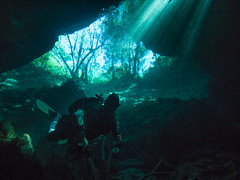 Leaving the Forest Behind (altsaint) Tags: 714mm chacmool gf1 mexico panasonic cavern caverndiving cenote scuba underwater water