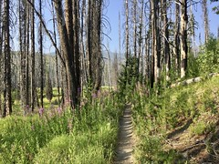 In and Around Burgdorf hot springs area idaho (Doug Goodenough) Tags: bicycle bike cycle hot springs hotsrpings burgdorf idaho warren loon lake forest camping pedals spokes smoke smokey summer august 2017 17 surly pugsley krampug 29 gravel dirt swim river secesh trail trails drg53117 drg53117p drg53117burgdorf drg531