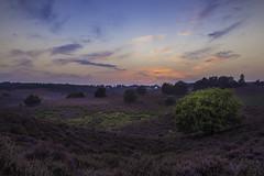 Sunset Veluwezoom (Jolanda van Velzen) Tags: veluwezoom veluwe heather heath field sunset sundown landscape nature hills purple jolanda van velzen rheden netherlands nederland posbank