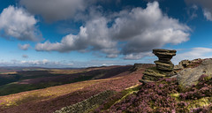 Derwent Edge, Late Summer (Peter Quinn1) Tags: darkpeak peakdistrict heather purple moors moorlanf derwentedge derwentmoors derbyshire saltcellar gritstone