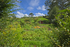 The Hobbit farms (T Ξ Ξ J Ξ) Tags: newzealand hobbitonmovieset fujifilm xt1 teeje fujinon1024mmf4 hobbiton hobbit landscape farms green