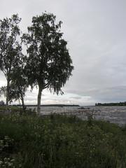 (helena.e) Tags: helenae semester vacation ålga husbil motorhome norrland water vatten torneälv älv kukkolaforsen haparanda