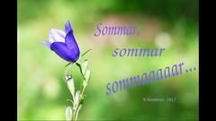 Sommaaar... (evisdotter) Tags: summer sommar video birds animals butterflies flowers insects