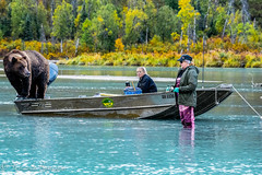 oso en boted (1 de 1) (barragan1941) Tags: alaska fauna gente lakeclark