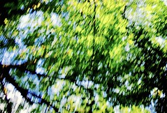 buzz (heroyama) Tags: tree nature forest park outdoor green 東京 japan ブレ ぶれ ブラー blur 緑 木 自然 みどり ミドリ trees グリーン 野外 tokyo 公園