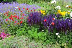 Summertime flowers, Alaska (Karlov1) Tags: flowers alaska