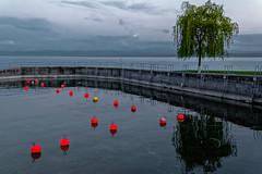 La nuit tombe sur le Bodensee (Lucille-bs) Tags: europe allemagne germany badewurtemberg hagnau lacdeconstance bodensee lac eau arbre bouée crépuscule jetée rouge reflet