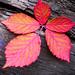 hello+autumn