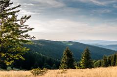 przełęcz (MichalKondrat) Tags: natura masywśnieżnika niebo pejzaż krajobraz drzewa polska 2017 35mm sierpień kotlinakłodzka sudety przyroda dolnośląskie zieleń góry chmury gminabystrzycakłodzka województwodolnośląskie poland pl