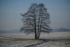 Lonesome Tree (Midnight Believer) Tags: katowicepoland tree rural winter wintry field lonesome evening foggy europe