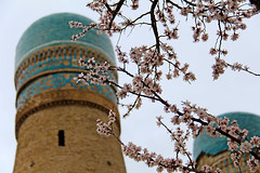 One of the minarets of Char Minar in Bukhara, Uzbekistan with a little spring blossom