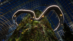 Singapore (dgarcia_) Tags: singapur singapore marina bay gardens by leds lights city sky scratcher rascacielos laser flower dome helix bridge