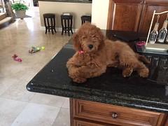 Polly's little girl Sophie!